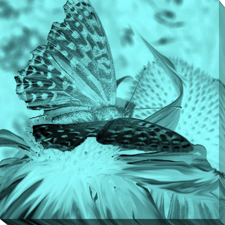 X Ray Butterfly 1 Framed Canvas Art
