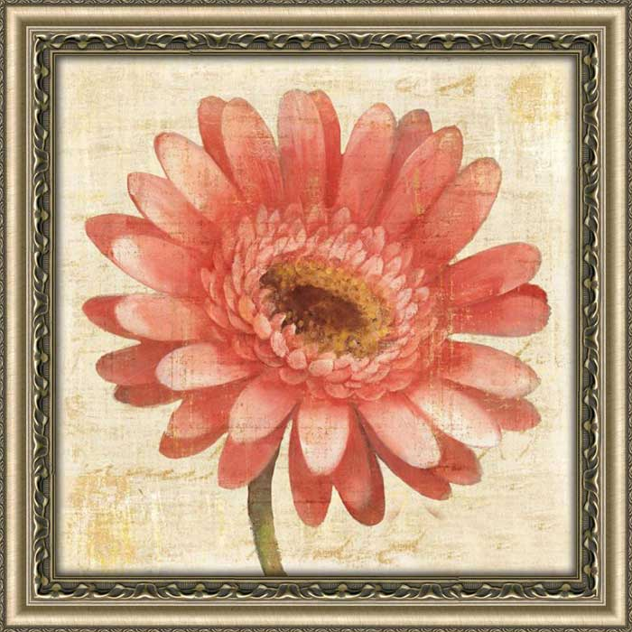 Blushing Gerbera on Cream